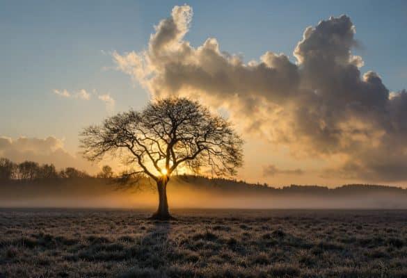 lone-tree-1934897_1280