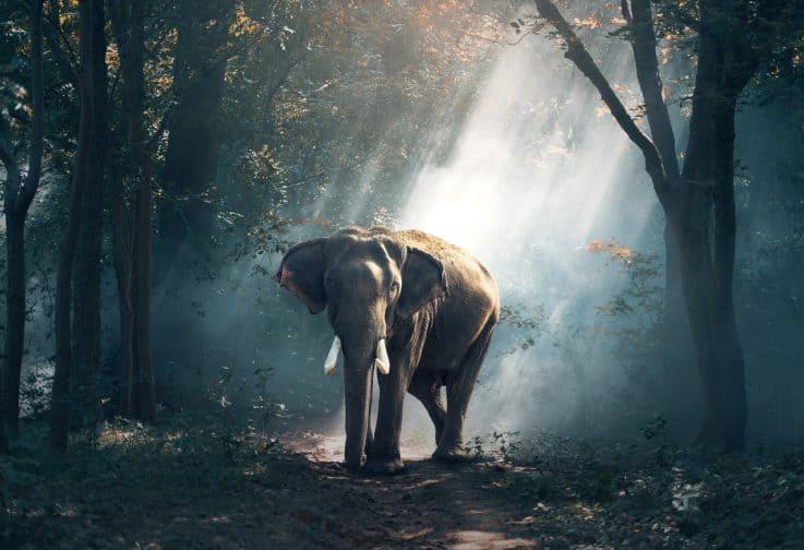 elephant-1822636_1280